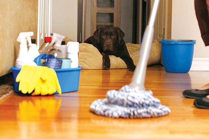 Собака наблюдает за процессом уборки